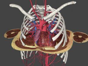 Laboratorio de Anatomía Interactiva